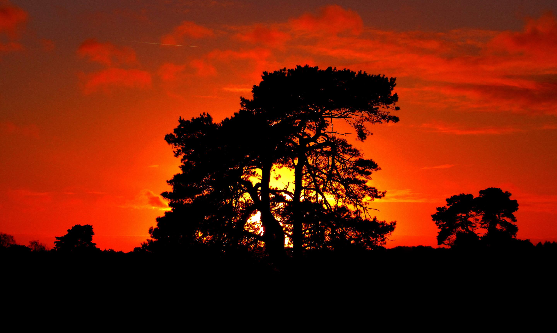 De avondzon zet met haar laatste stralen een oude vliegden in een gouden licht - Foto: ©Louis Fraanje
