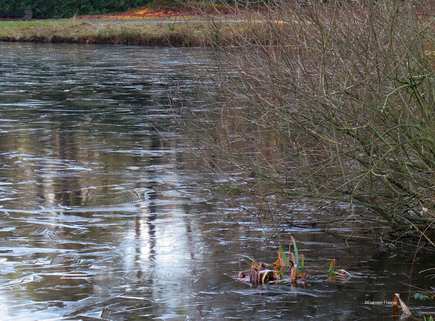 Op de grote vijver lag een dun laagje ijs - Foto: ©Fransien Fraanje
