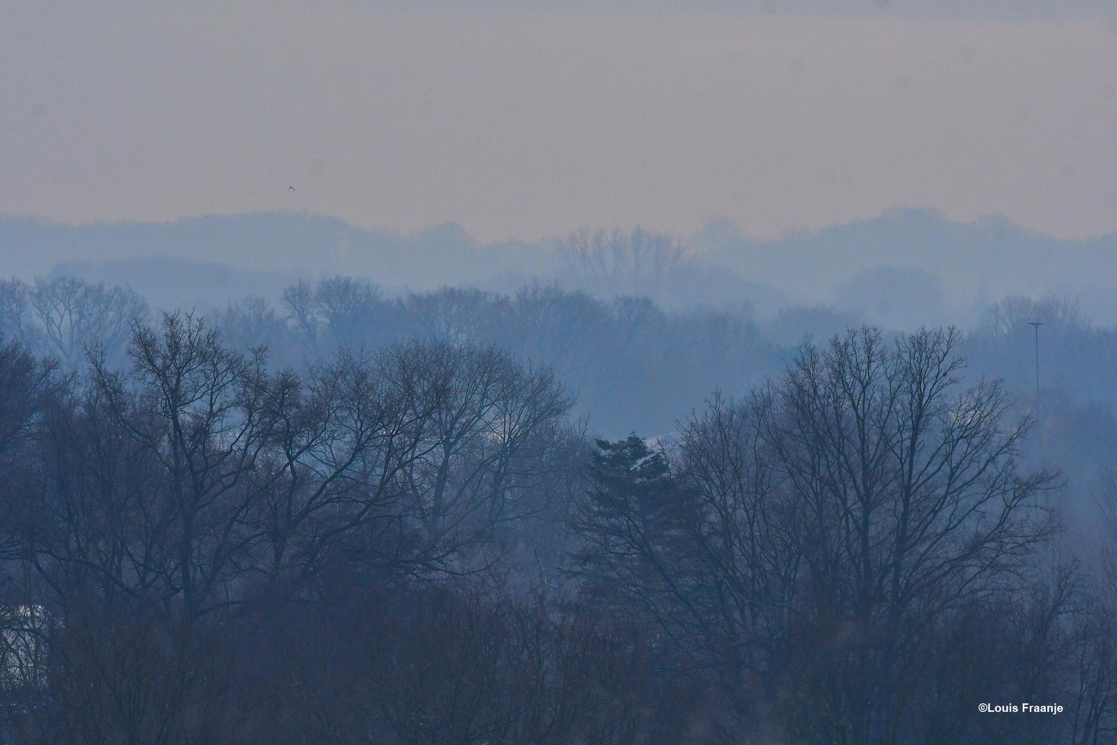 Lange nevelslierten tussen de bomen van het Veluwse bos - Foto: ©Louis Fraanje