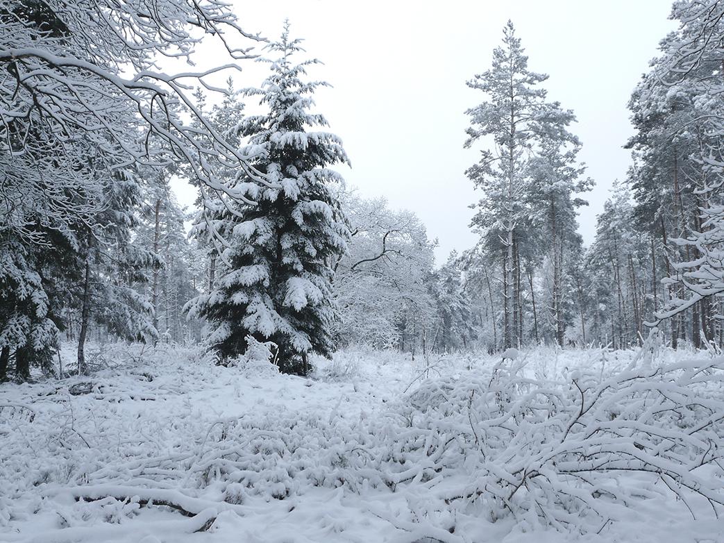 Dwalen in de eenzaamheid van een winter wonderland - Foto: ©Louis Fraanje