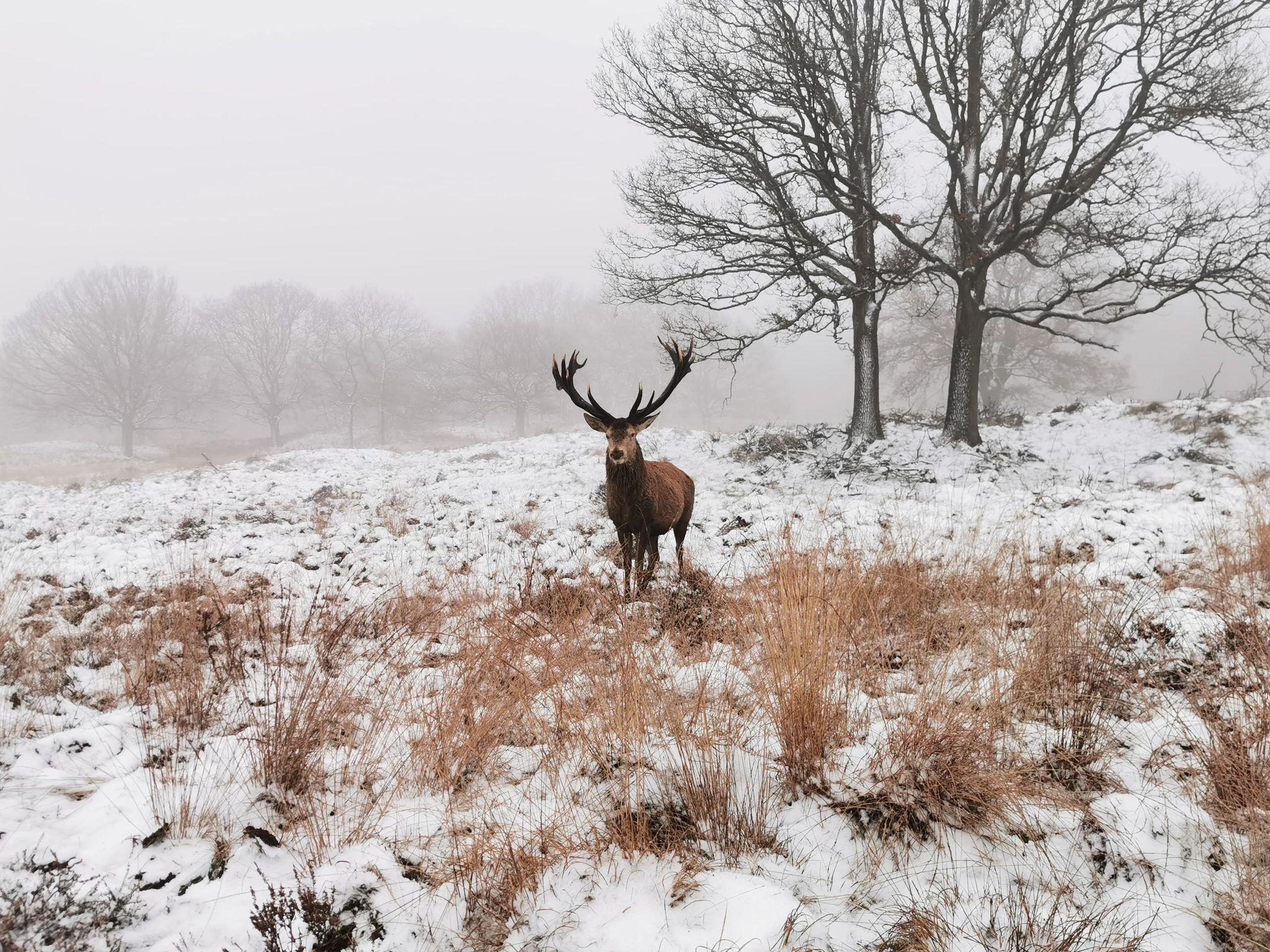 Hubertus kijkt nieuwsgierig nar de voorbijganger in het veld - Foto: ©Melvin Bloem