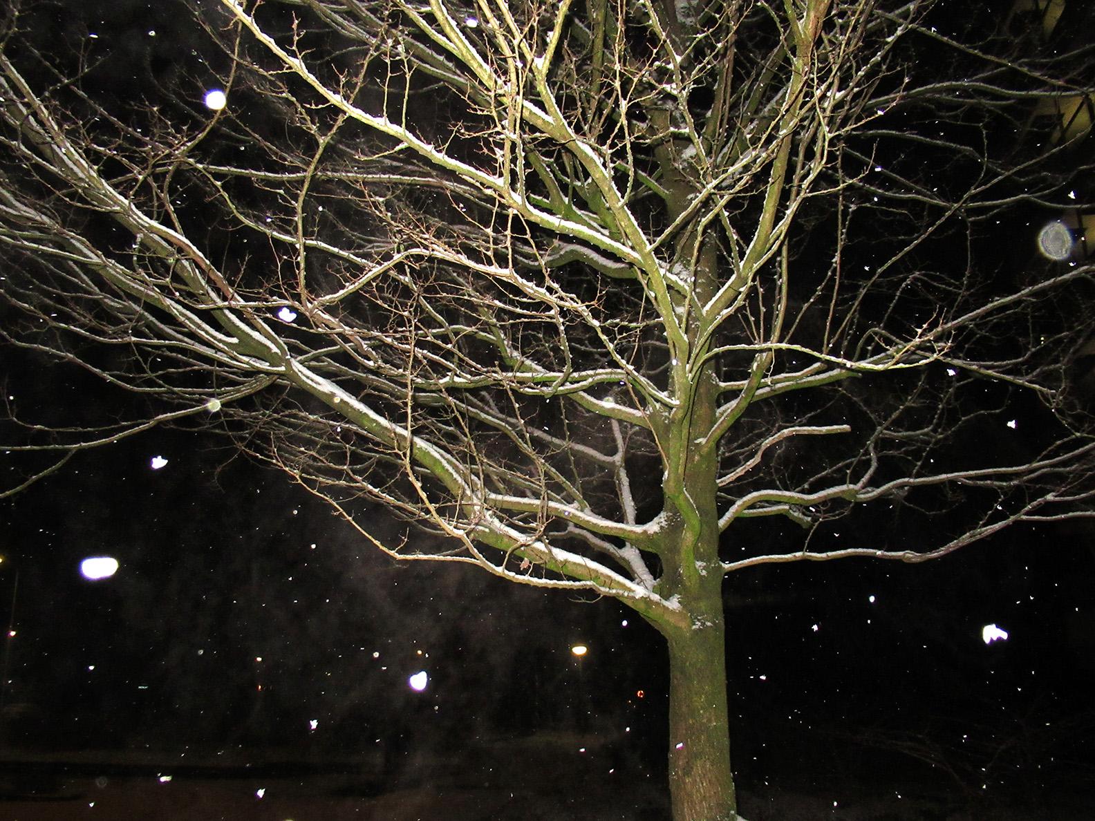 Een kale boom in de avond is ook kunst - Foto: ©Fransien Fraanje