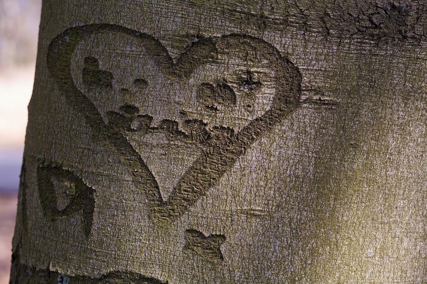 Een liefdesverklaring zoals er zoveel op bomen te vinden zijn; het ware verhaal erachter is slechts weinigen bekend – Foto: ©Yvonne Arentzen