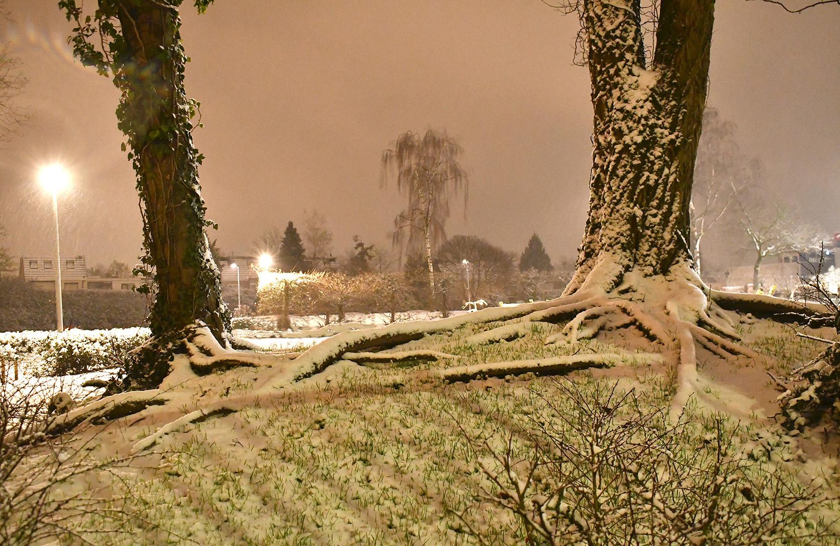 Toch heeft de sneeuw onze buurt omgetoverd tot een klein sprookje - Foto: ©Louis Fraanje