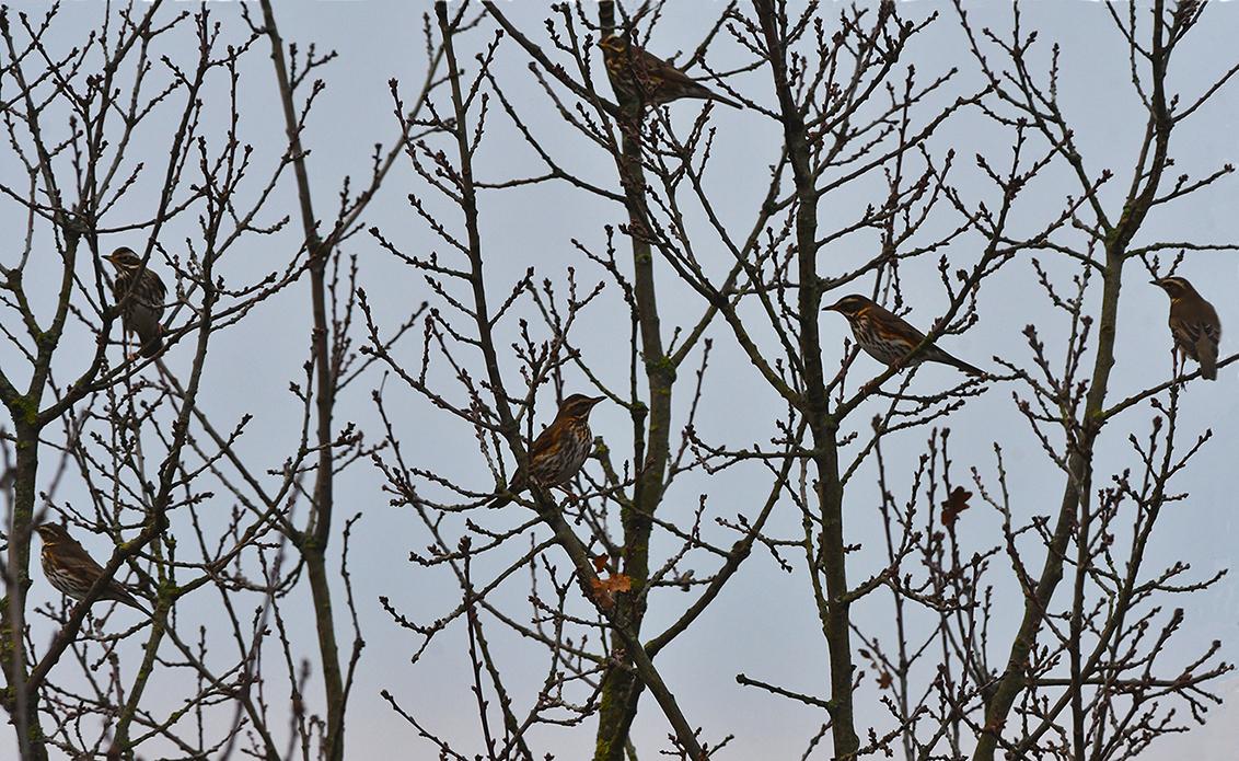 Ineens een gefladder en zitten er een stel koperwieken in de boom - Foto: ©Louis Fraanje