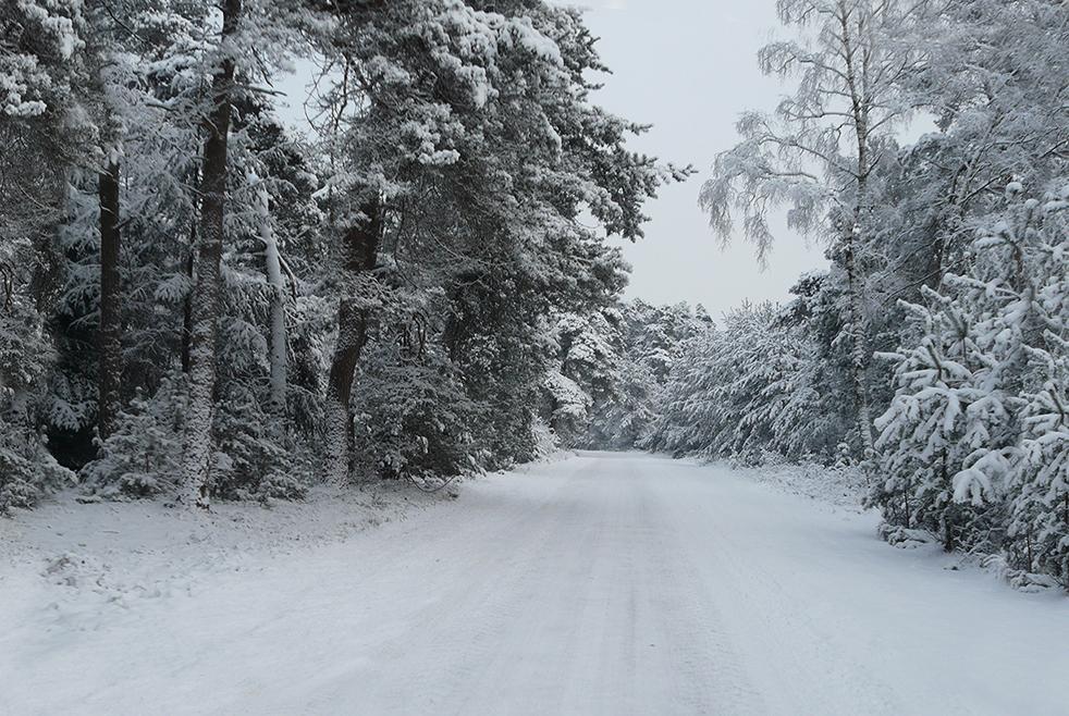 Langs de boswegen lijken de besneeuwde bomen net een sprookjeswereld - Foto: ©Louis Fraanje