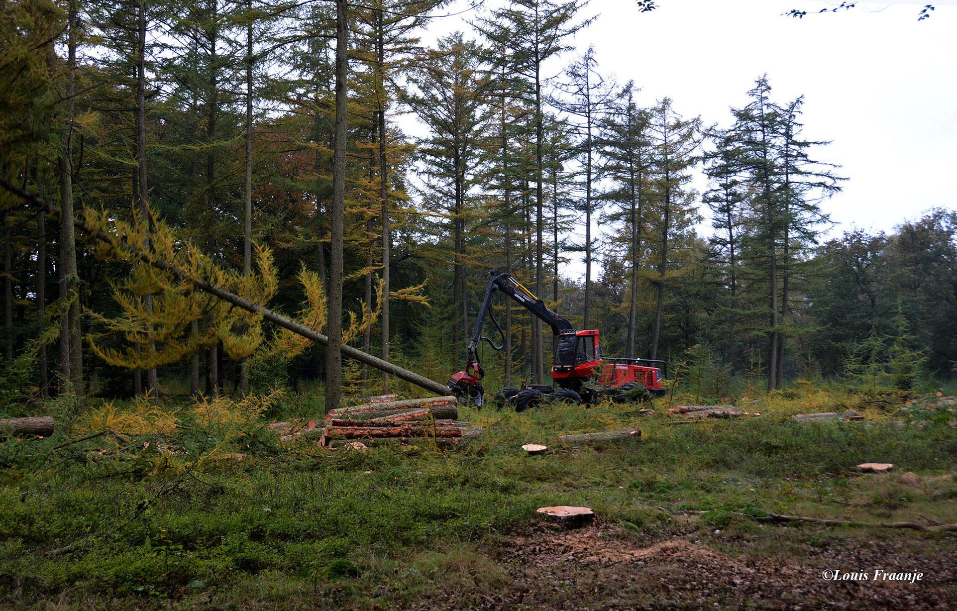 Vooral gemakkelijk te oogsten bossen gaan voor de bijl - Foto: ©Louis Fraanje