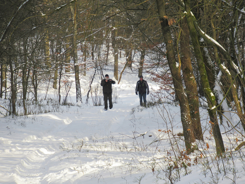 Louis en Florus in het winterse bos op de Hoge Veluwe - Foto: Fransien Fraanje