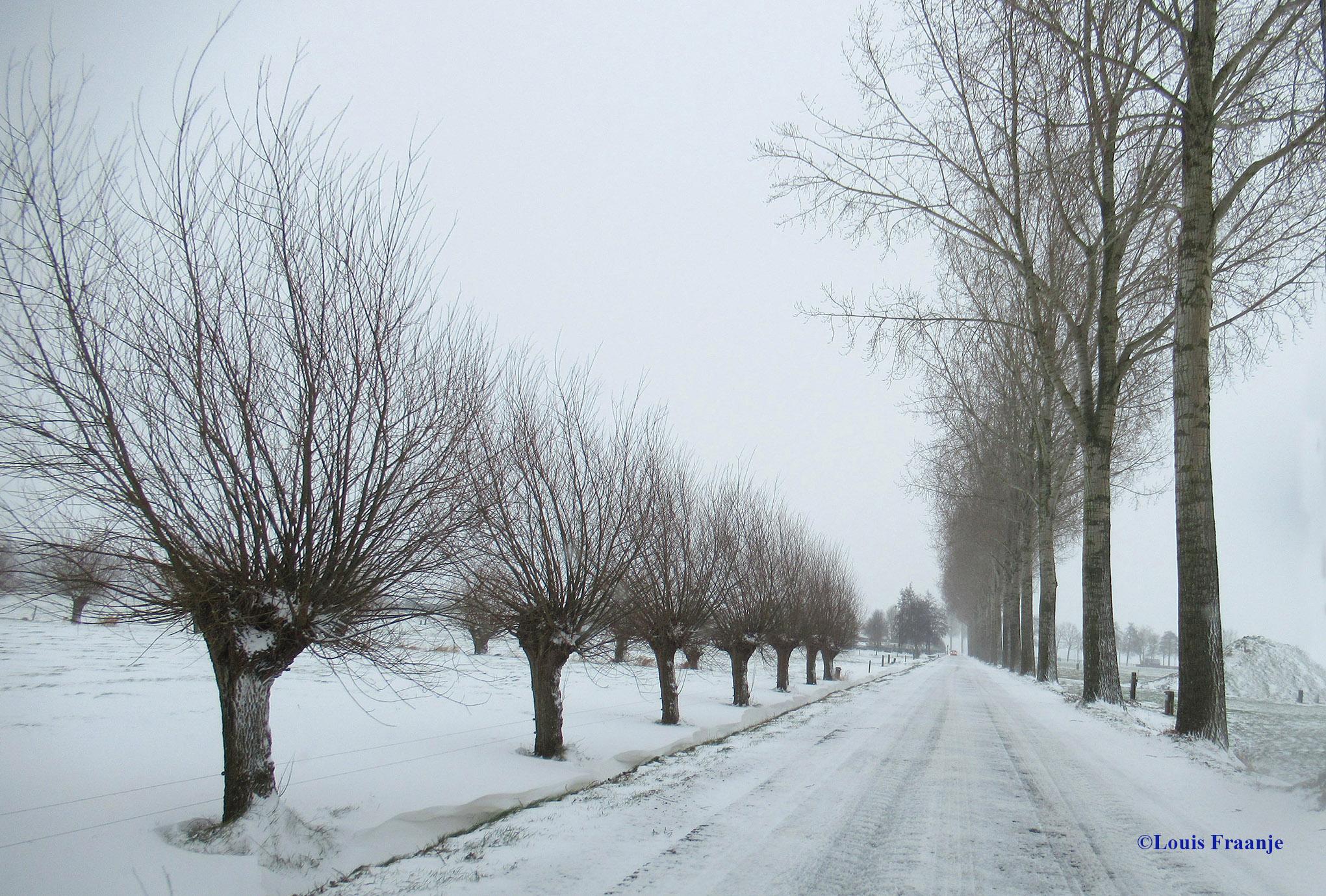 Wilgen en populieren geven de Eemweg meer charme - Foto: ©Louis Fraanje