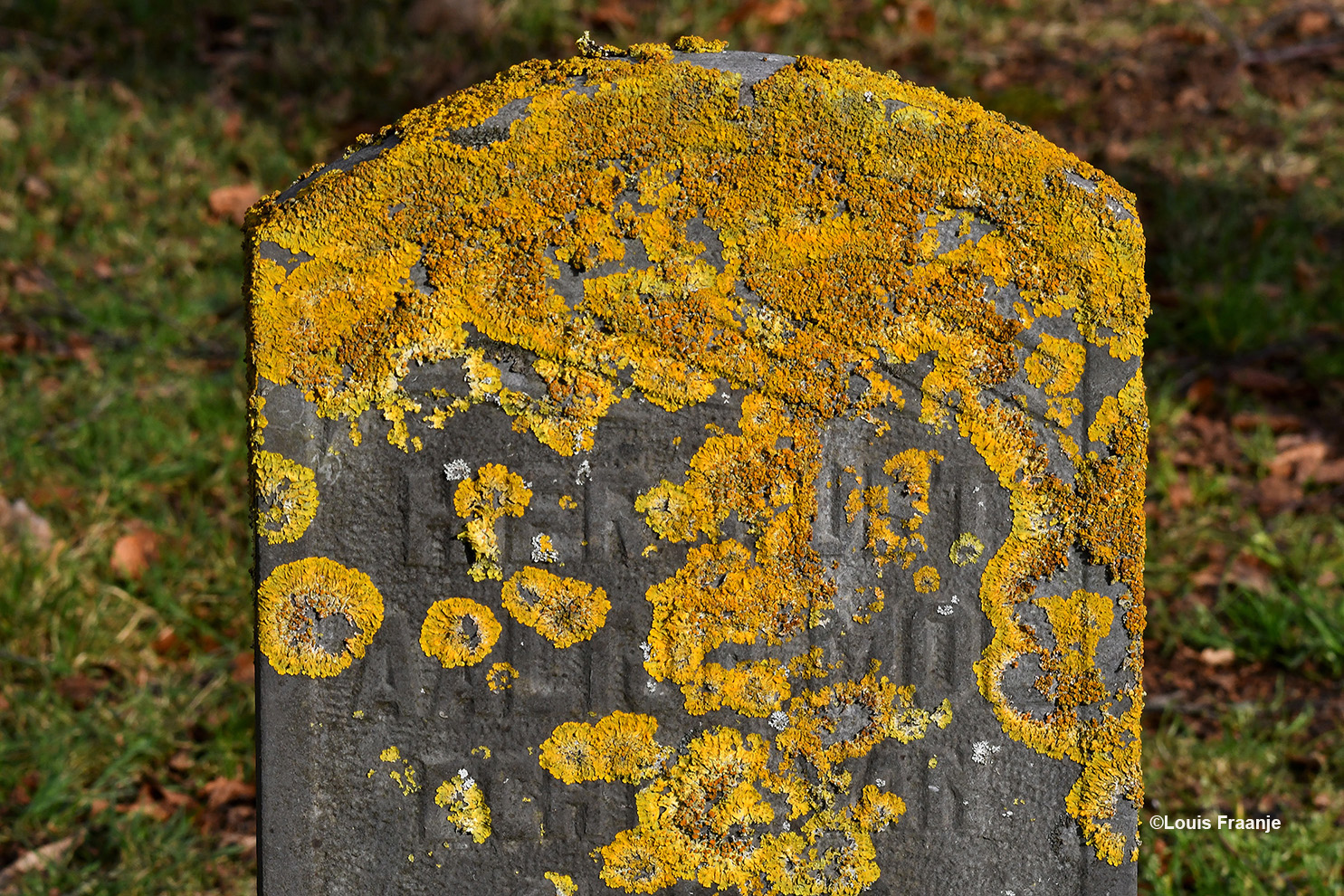 Deze oude, bemoste en bijna onleesbare grafsteen, geeft maar weer eens heel duidelijk aan wat er overblijft hier op aarde - Foto: ©Louis Fraanje