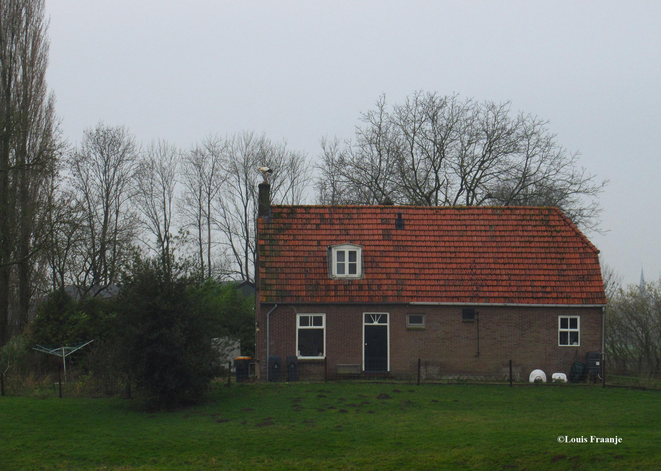 De ooievaar heeft het hogerop gezocht op de schoorsteen van de boerderij - Foto: ©Louis Fraanje