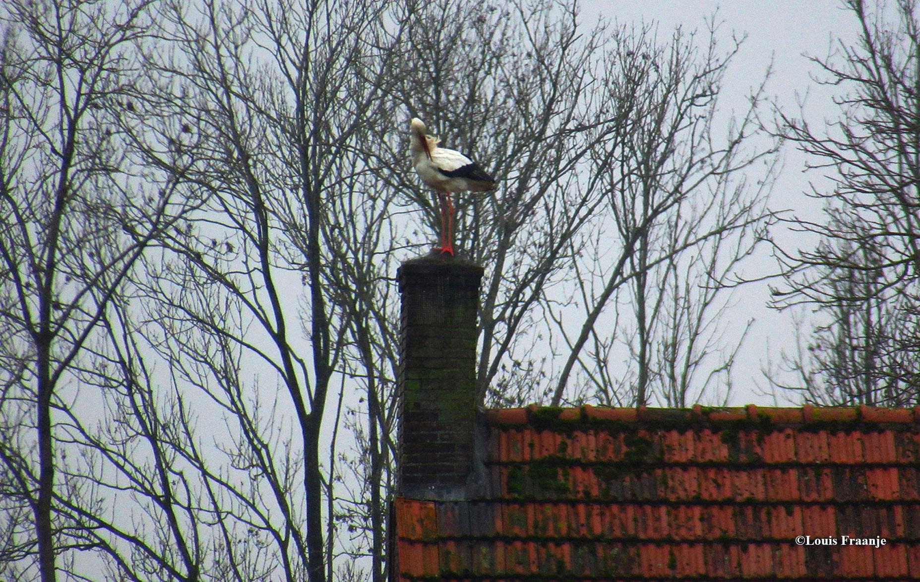Hoog en droog staat de ooievaar, kijk maar... op de schoorsteen daar! De omgeving van Voorst is de ooievaar al jarenlang een bekende verschijning - Foto: ©Louis Fraanje