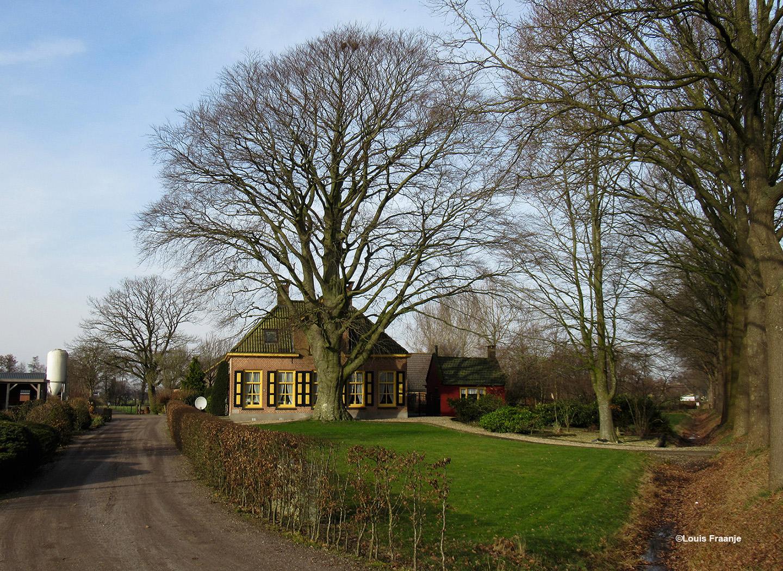 Vanaf Nunspeet rijden we over Elburgerweg op nummer 109 links van ons een prachtige boerderij met een enorme beukenboom aan de voorkant - Foto: ©Louis Fraanje