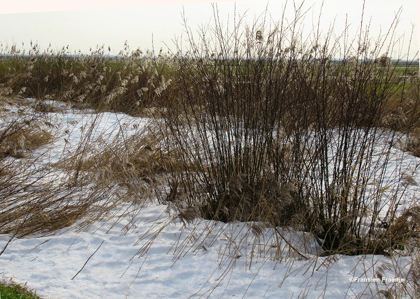 En... de sneeuw is ook hier nog niet helemaal verdwenen, wat een verschil met de bloeiende crocussen en sneeuwklokjes, maar... de Lente is in aantocht - Foto: ©Fransien Fraanje