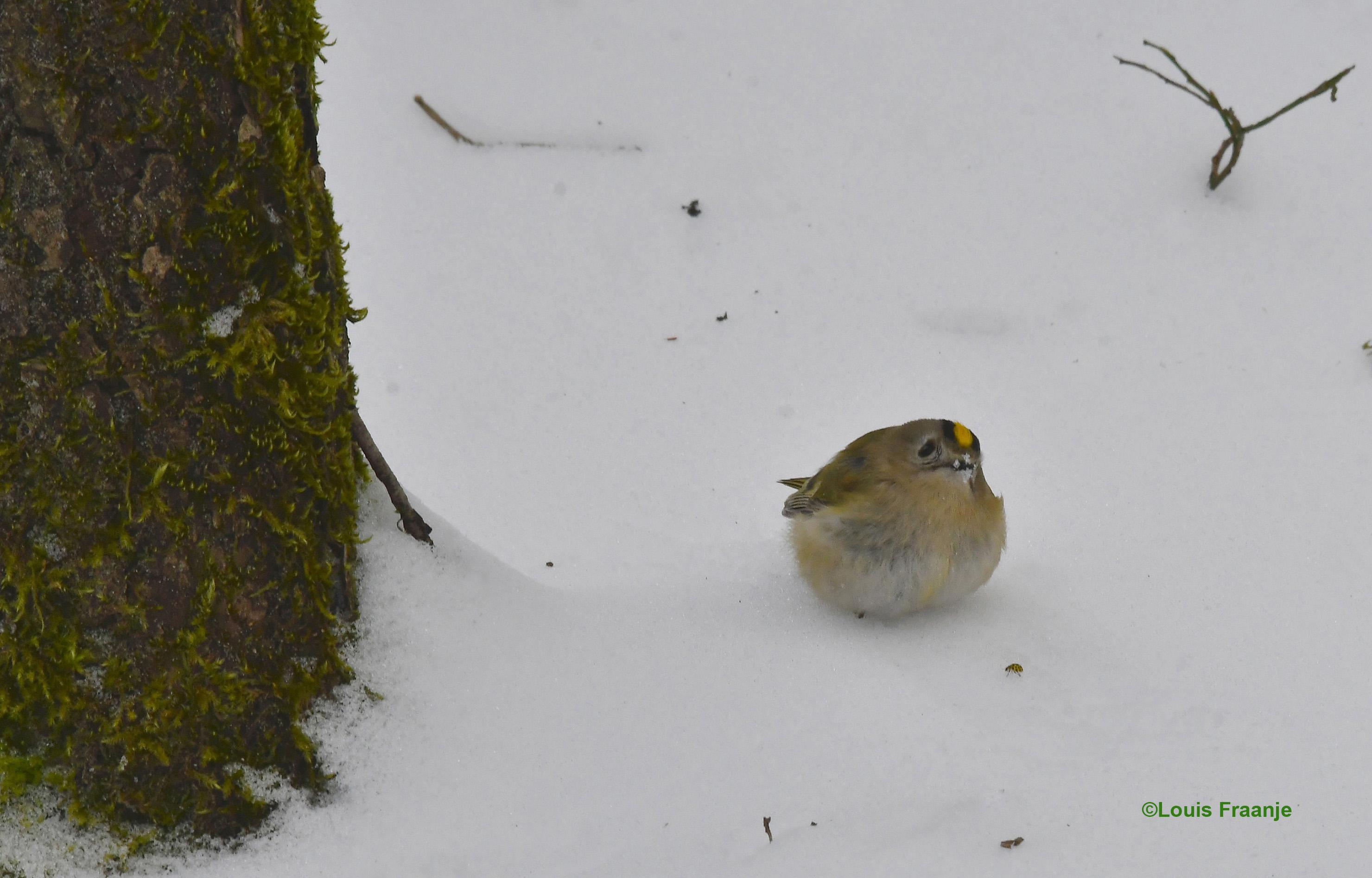 Heel verbaasd kijkt het tweebenige vogeltje naar die hele grote tweebenige vreemde vogels - Foto: ©Louis Fraanje