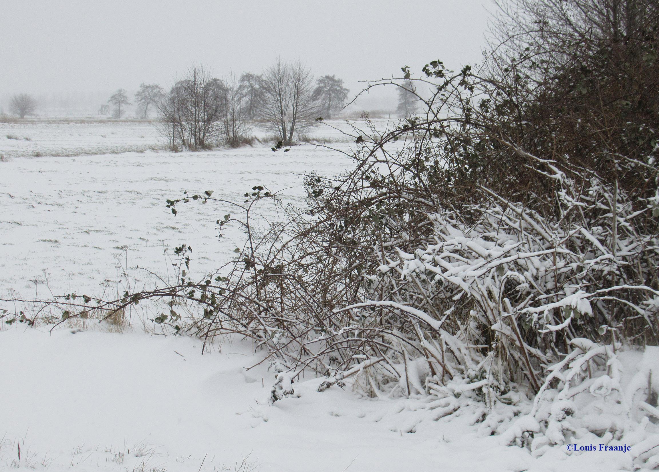 Weer zo'n mooi hoekje in de sneeuw met een prachtige doorkijk - Foto: ©Louis Fraanje