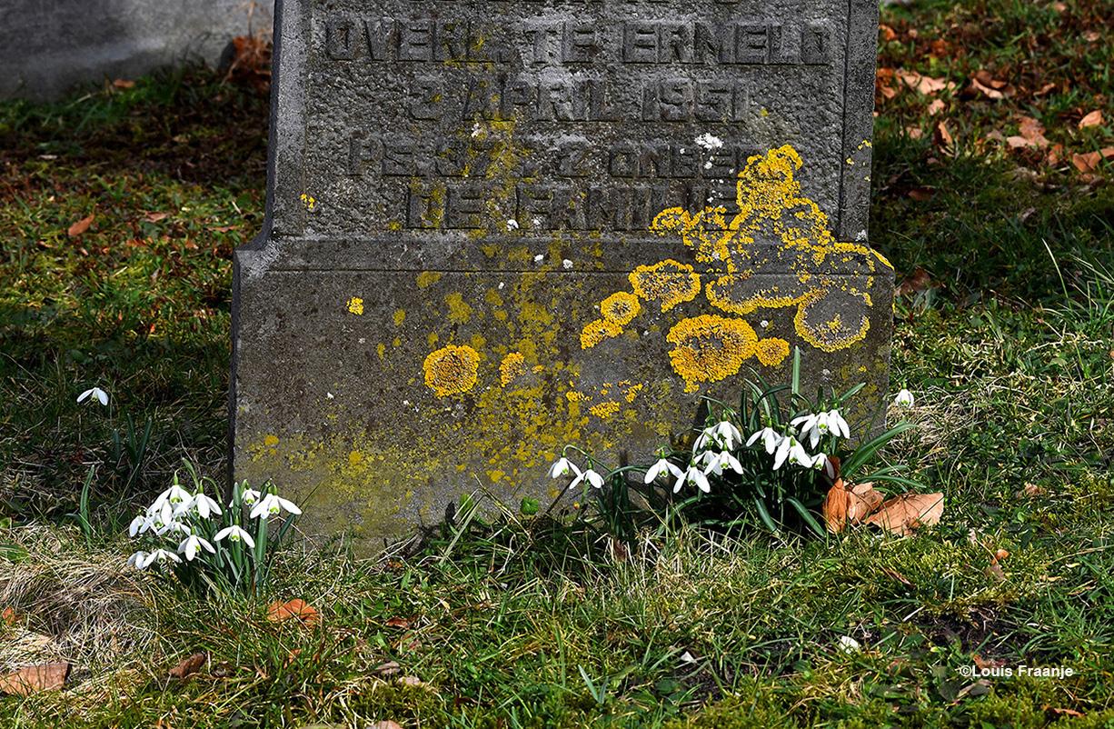 Op de Algemene Begraafplaats in Oosterwolde worden we verwelkomd door de vele sneeuwklokjes. Ook hier bij een oude bemoste grafsteen, die omringd wordt door de kleine bloemetjes - Foto: ©Louis Fraanje