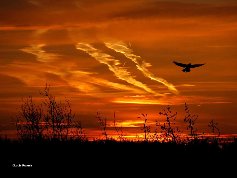 Ochtendgloren met enkele verwaaide vliegtuigstrepen en een wat schor roepende kraai - Foto: ©Louis Fraanje