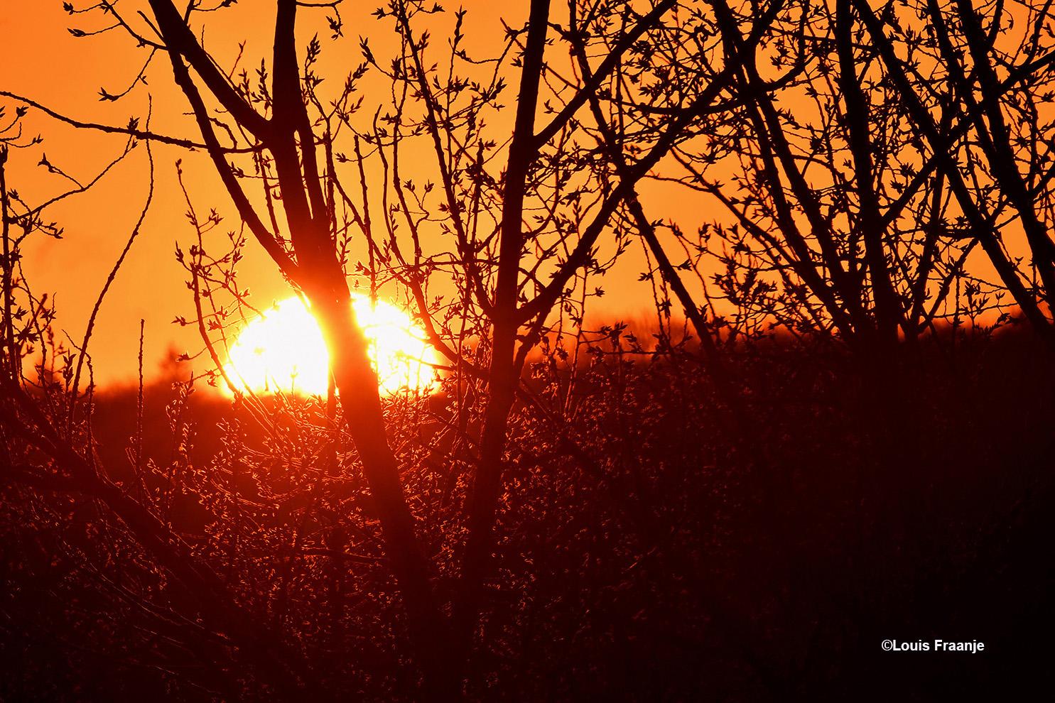 De morgenzon haar warme stralen tussen de 'bottende' takken van de bomen doorschijnen.- Foto: ©Louis Fraanje