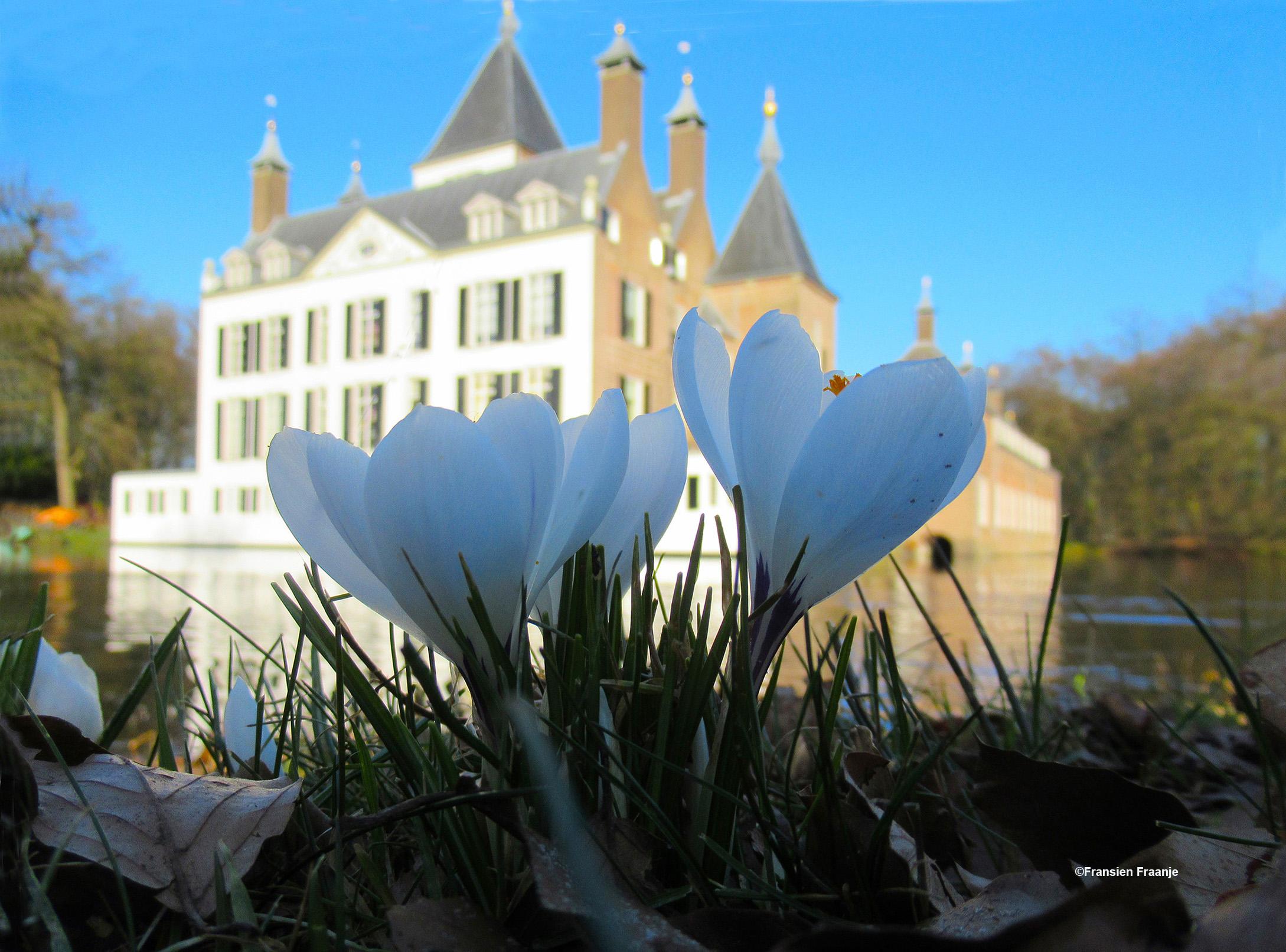 Eerst nog wat bloeiende crocussen op de voorgrond, om de spanning op te bouwen - Foto: ©Fransien Fraanje