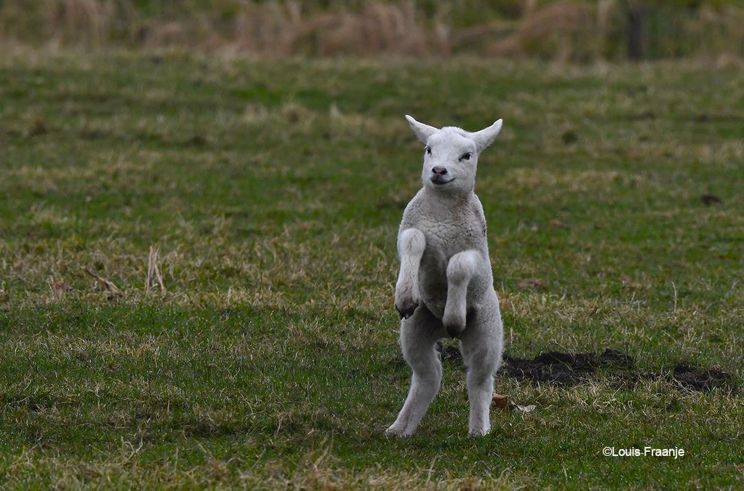 Nou... nou... kijk mij dan ik sta zomaar even op mijn achterpoten, dat ziet er effe stoer uit of niet soms? - Foto: ©Louis Fraanje