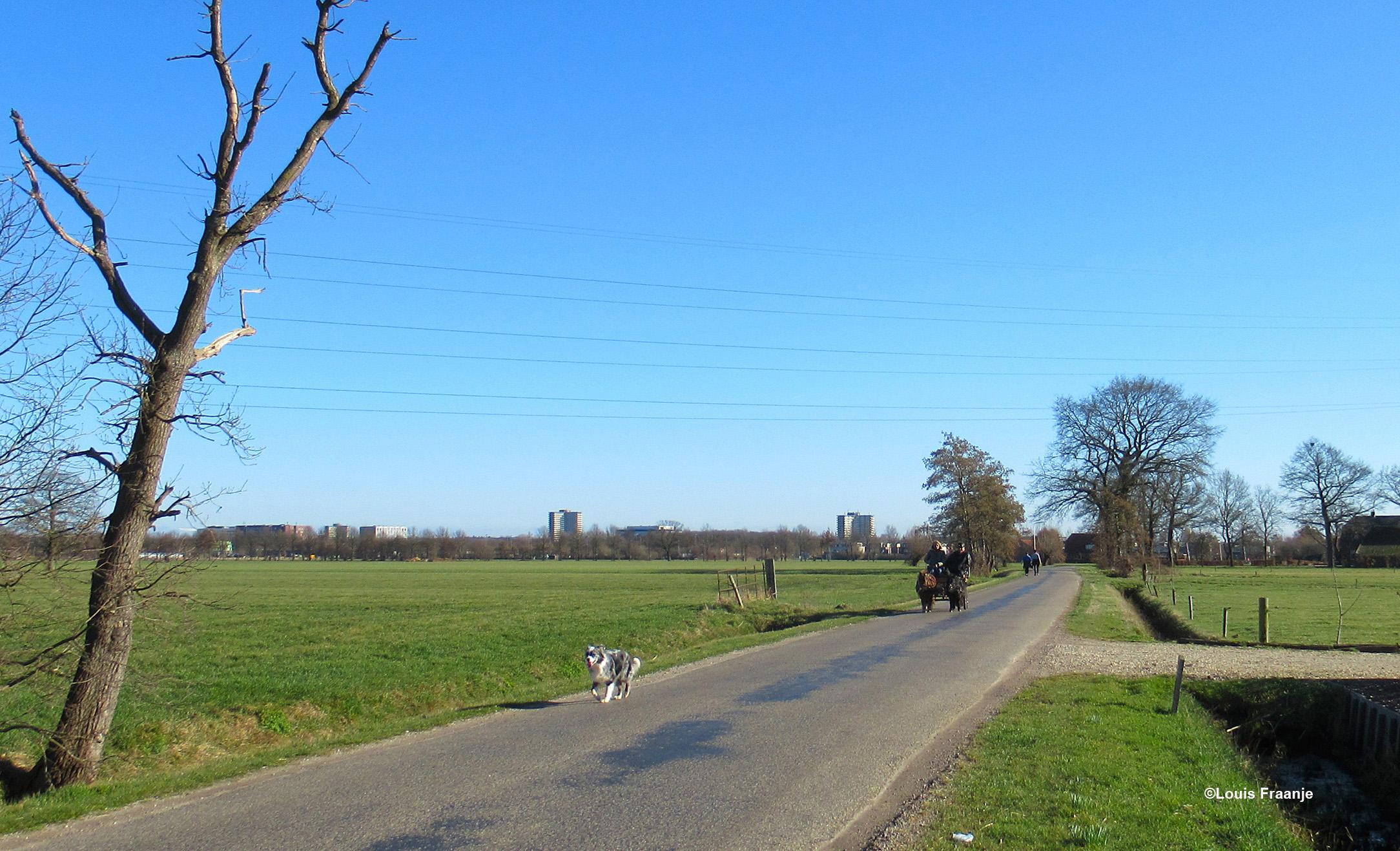 Op de terugweg zagen wij op de Rijnsteeg een bijzondere aanspanning aankomen, met voorop de hond . Op de achtergrond ligt Wageningen. - Foto: ©Louis Fraanje