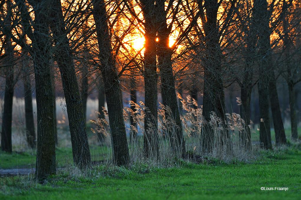 Het lage strijklicht van de zon zet de tere rietstengels nog een keer extra in het 'zonnetje' - Foto: ©Louis Fraanje