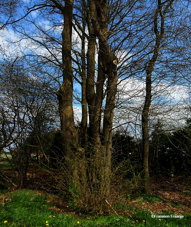 Hier een prachtig natuur-kunstwerk van een in elkaar gegroeide boom - Foto: ©Fransien Fraanje