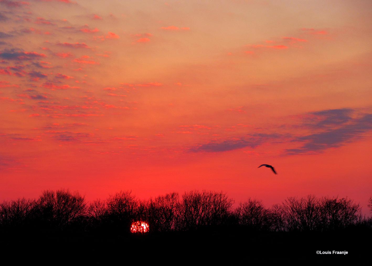 Als de zon langzaam wegzakt aan de horizon, kleurt de avondhemel vlammend rood - Foto: ©Louis Fraanje