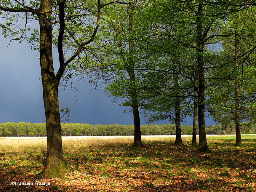 Het oplichtende groen van het bos, met daarachter een dreigende 'loodgrijze' lucht - Foto: ©Fransien Fraanje