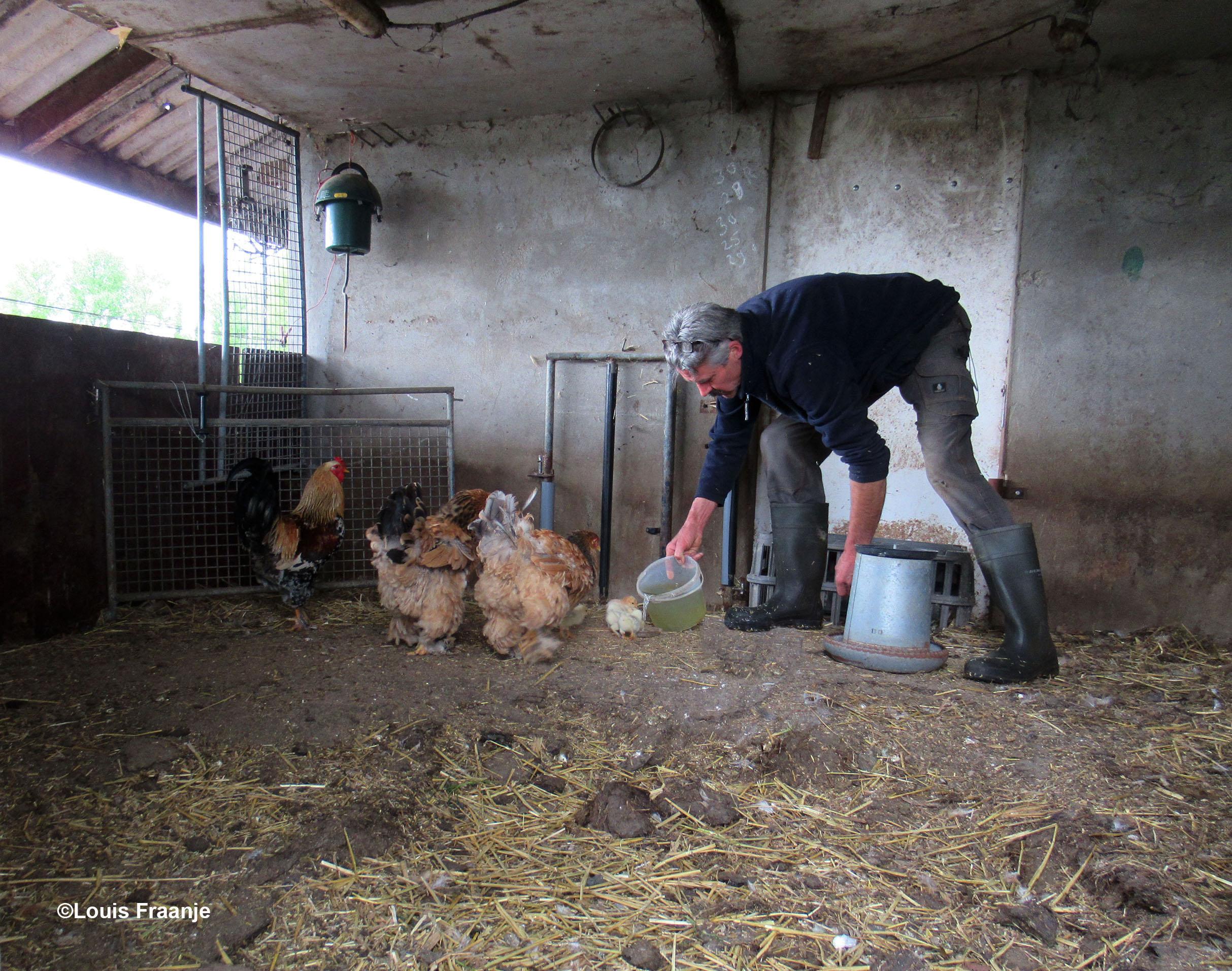 Boer Peter giet even wat water in een laag bakje voor de kuikentjes - Foto: ©Louis Fraanje