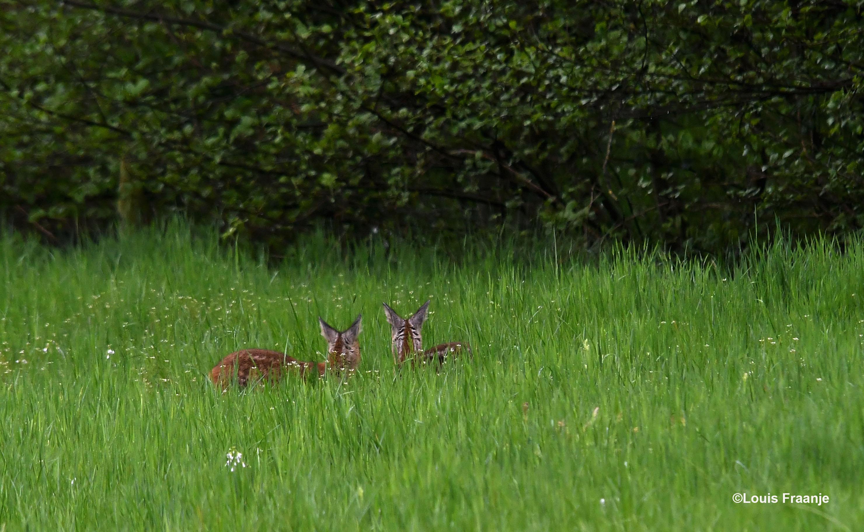 Even later aan de bosrand, wat zien ze eigenlijk? - Foto: ©Louis Fraanje
