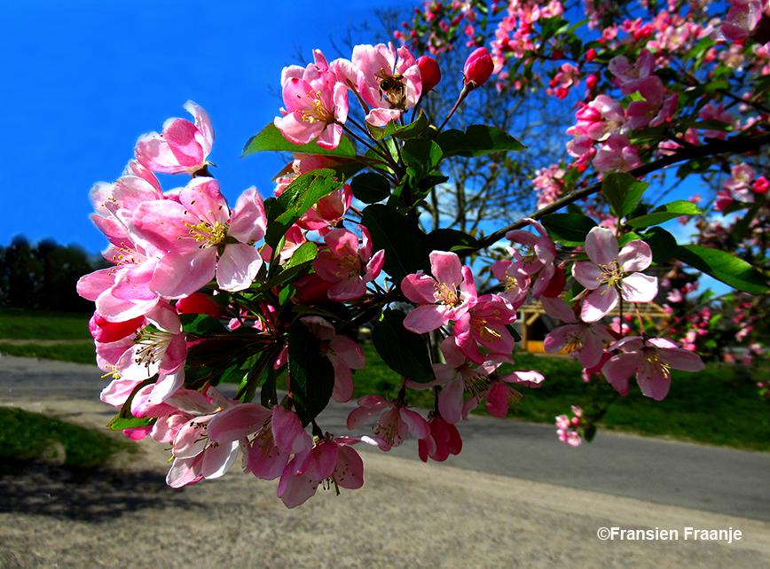 Hier worden wij helemaal blij van - Foto: ©Fransien Fraanje