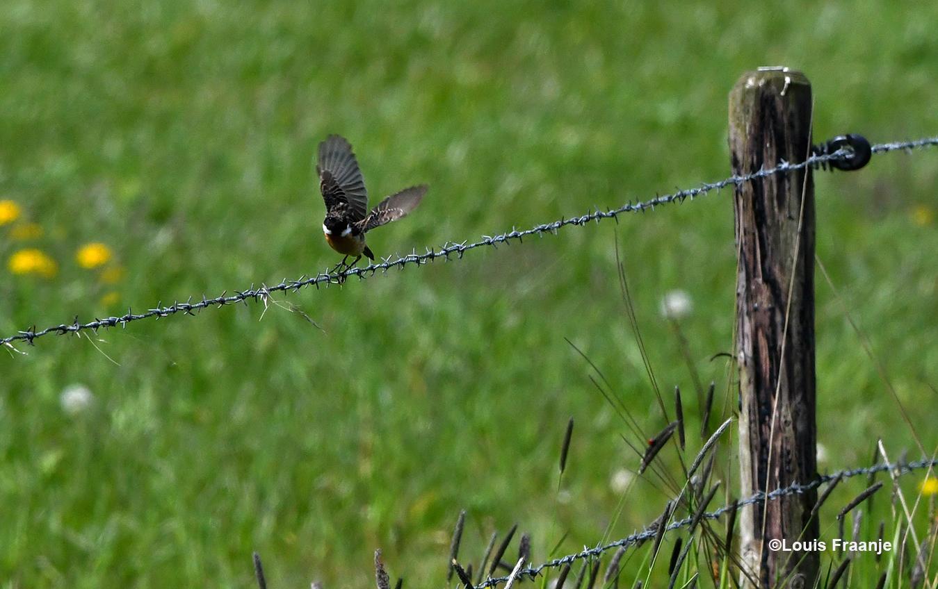 En als ze verder vliegt, dan ga je als man er natuurlijk achteraan, zeker op Moederdag - Foto: ©Louis Fraanje