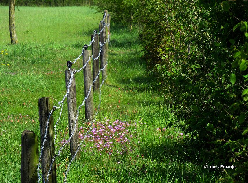 Zomaar een doorkijkje langs het weiland - Foto: ©Louis Fraanje