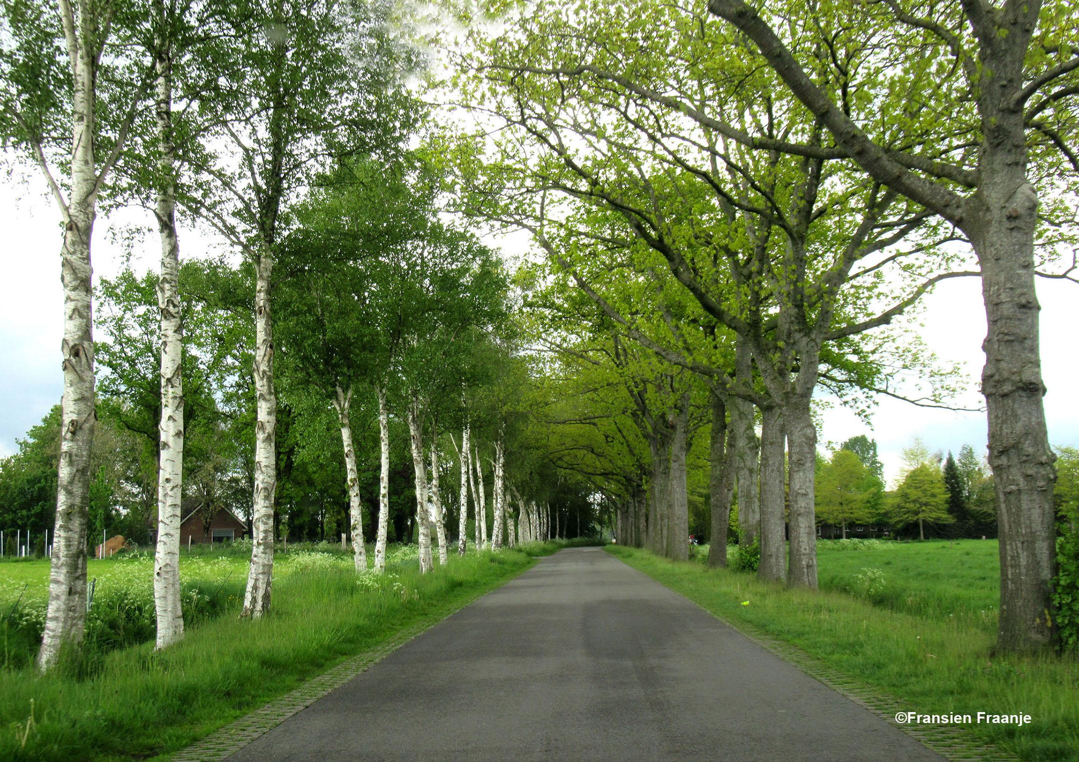 Genieten van het groen en de witte berken langs De Kleine Haar. Dit soort wegen doet ons denken aan de Lüneburger Heide - Foto: ©Fransien Fraanje