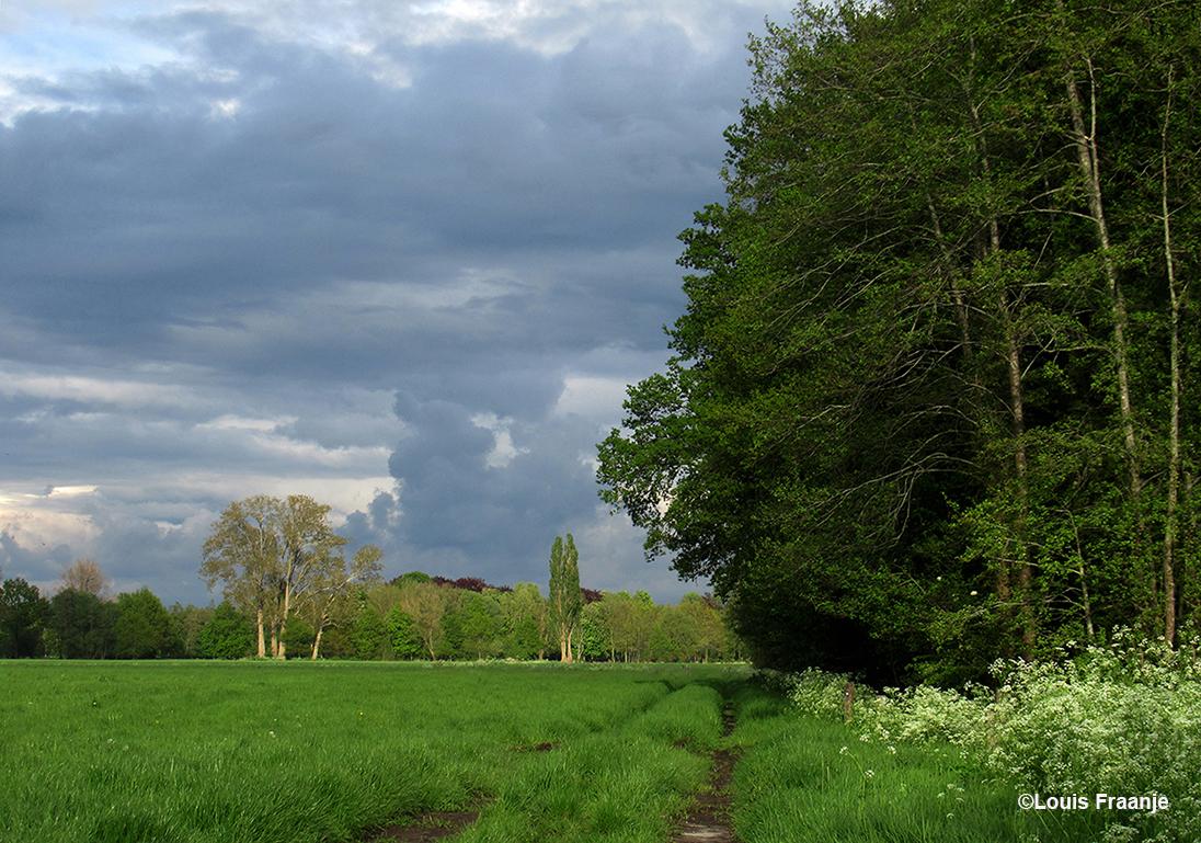 Dit is het uitzicht vanaf mijn aanzitplek achter het hek - Foto: ©Louis Fraanje