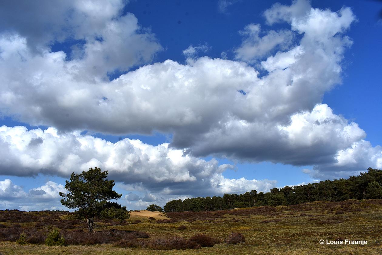 Mooie wolkenluchten boven het land van hei en dennen op de Hoge Veluwe - Foto: ©Louis Fraanje