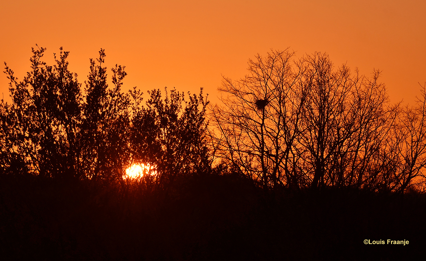 Zonsopkomst boven het Veluwse bos - Foto: ©Louis Fraanje