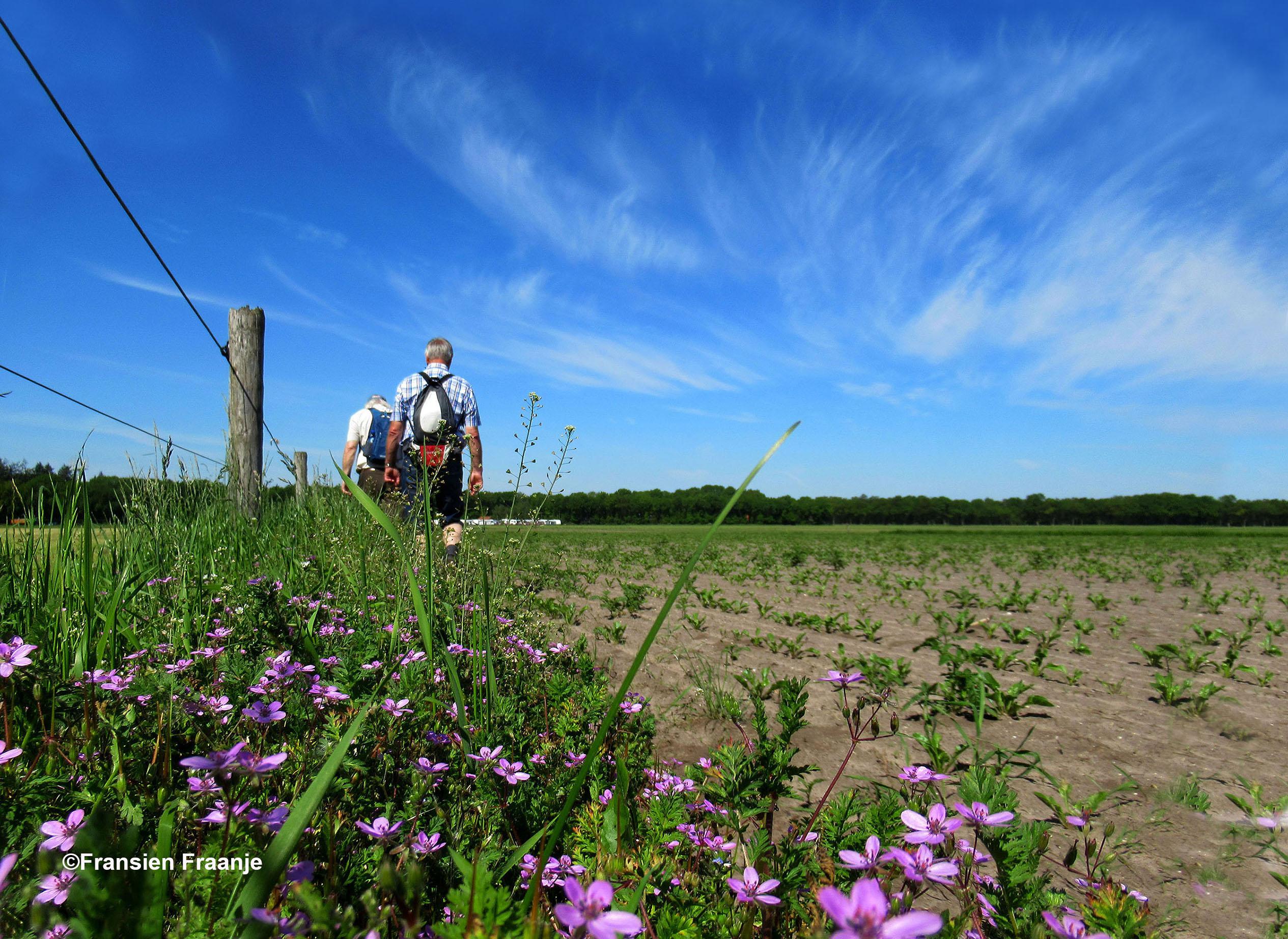Heerlijk wandelen met prachtige windveren aan de hemel - Foto: ©Fransien Fraanje