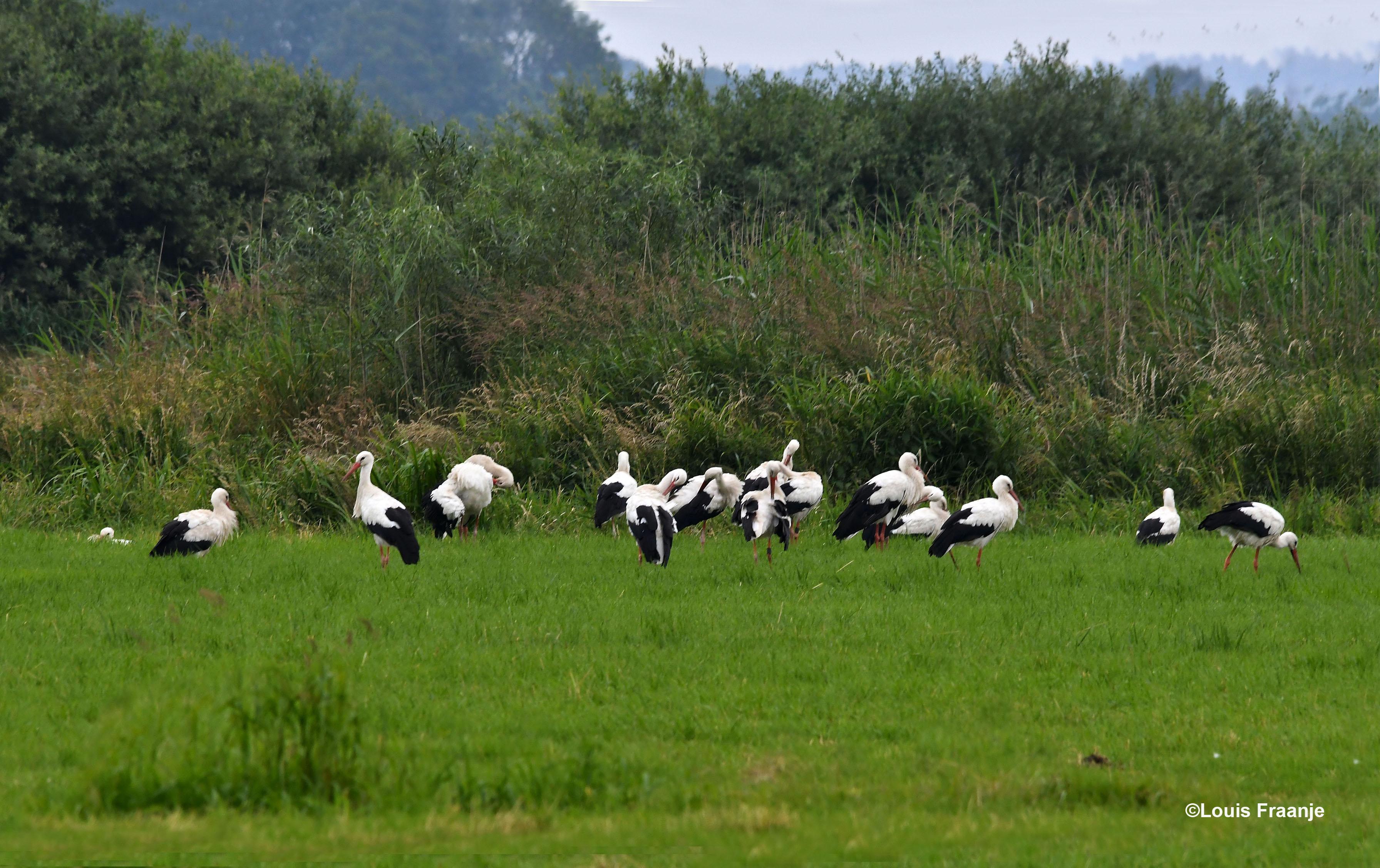 Hier een klein deel van deze grote groep ooievaars - Foto: ©Louis Fraanje