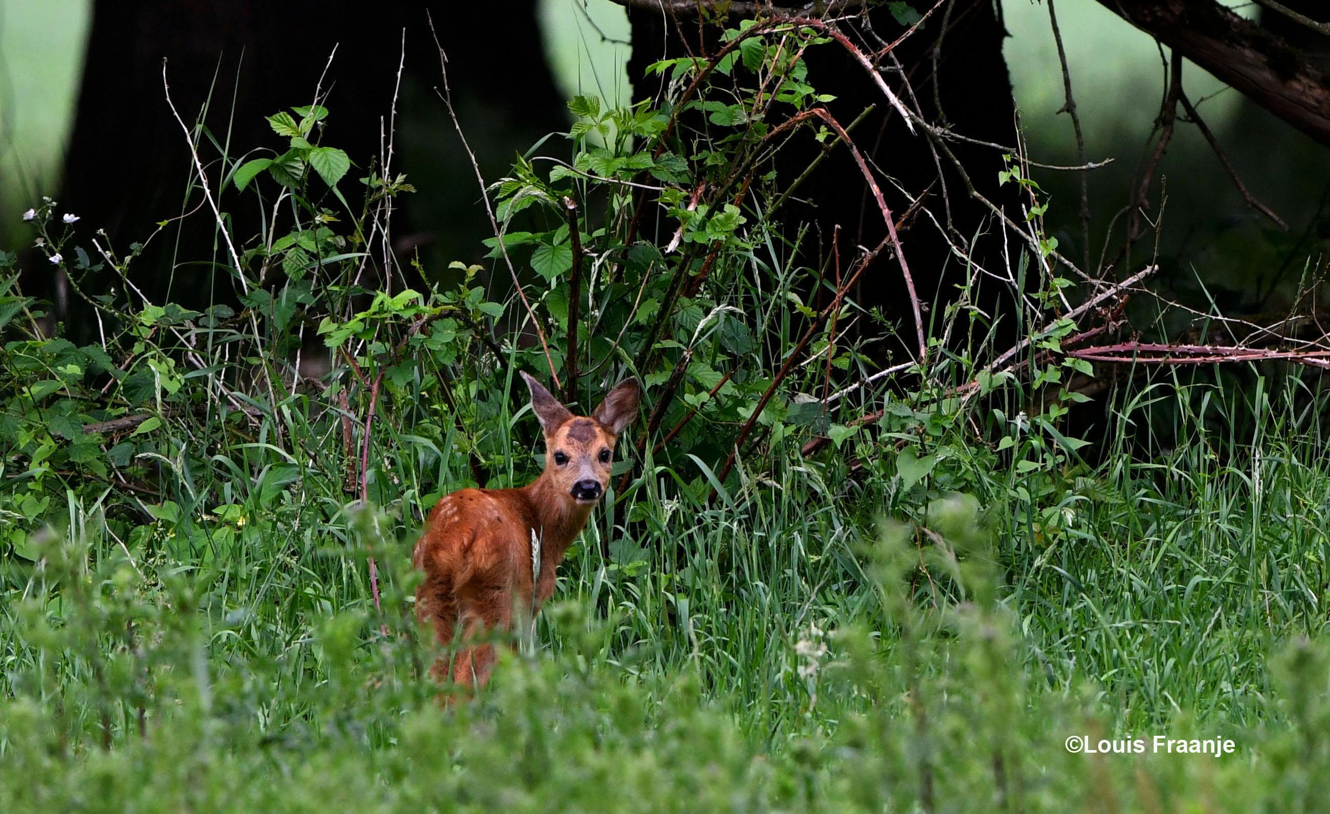 Heel nieuwsgierig stond de kleine om zich heen te kijken en met de oortjes te draaien - Foto: ©Louis Fraanje
