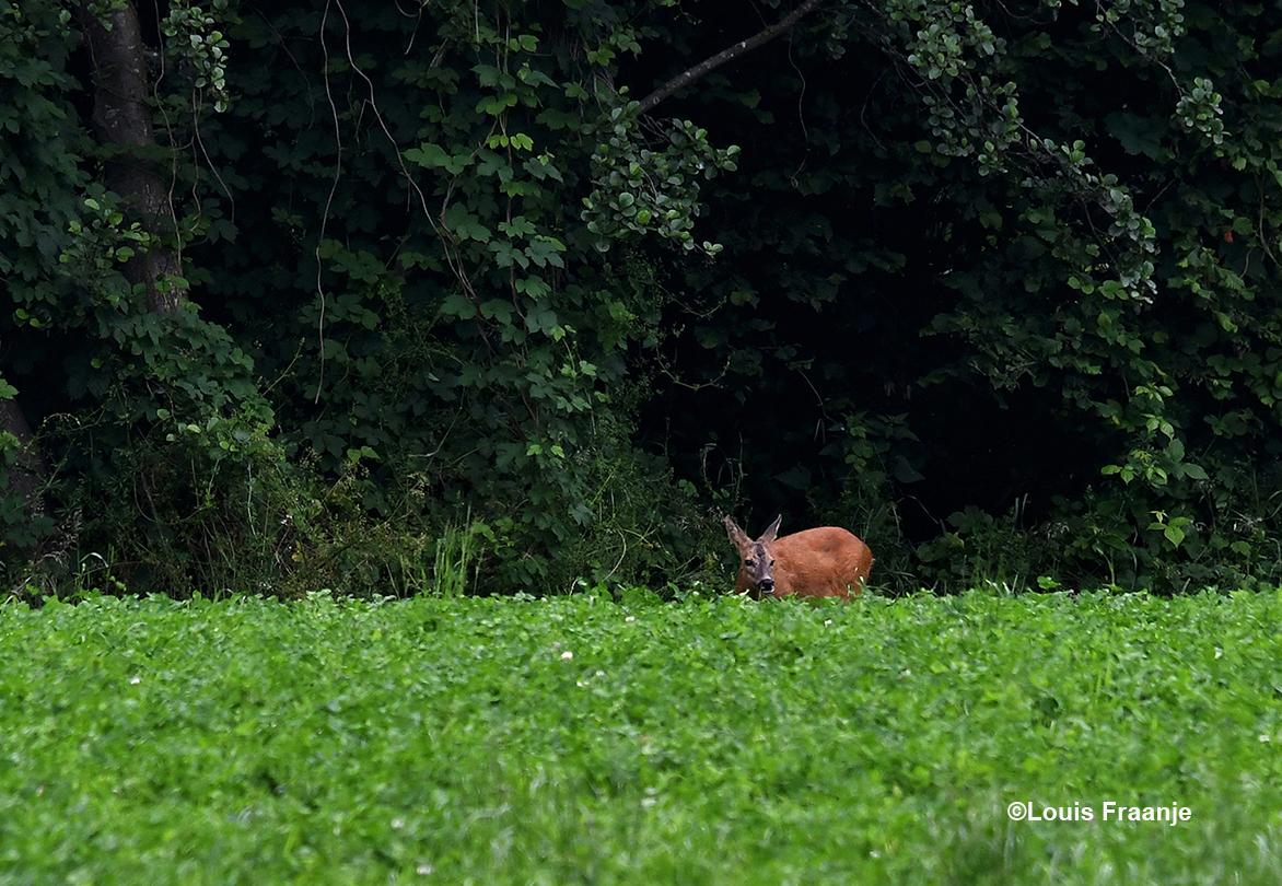 Dit is natuurlijk onze eigen Reegeit ergens tussen Lunteren en Renswoude - Foto: ©Louis Fraanje