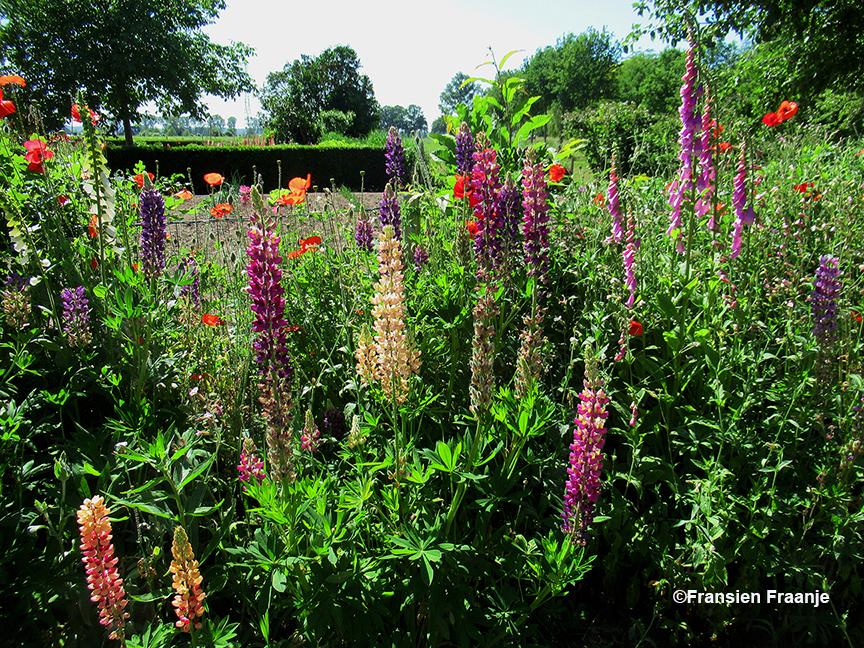 Weer een hele andere hoek met kleurrijke bloemen - Foto: ©Fransien Fraanje