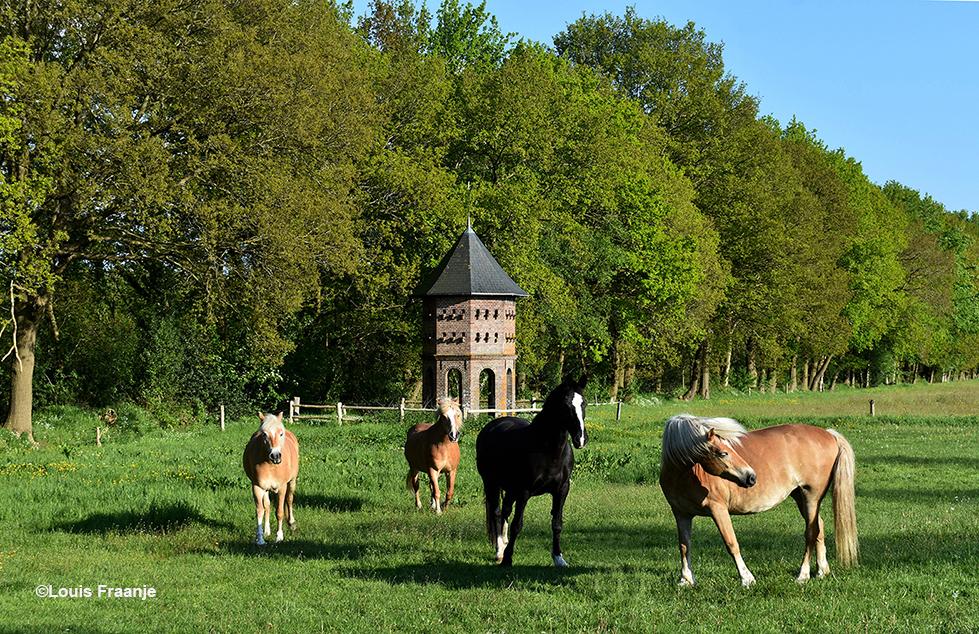 De paarden van Jan Overeem met op de achtergrond de Duiventoren - Foto: ©Louis Fraanje