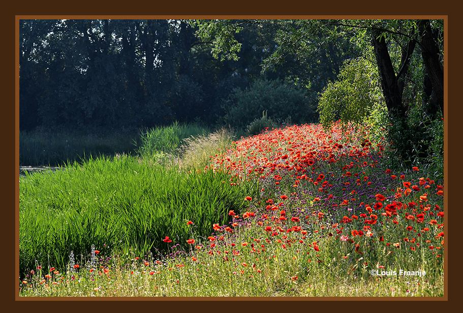 Zo'n prachtig tapijt met kleurrijke bloemen is toch geweldig! - Foto: ©Louis Fraanje