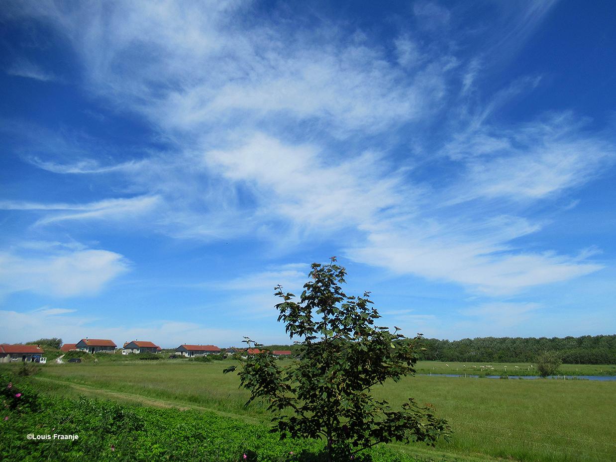Mooie windveren wuiven aan de hemel boven de wei voor ons huisje - Foto: ©Louis Fraanje