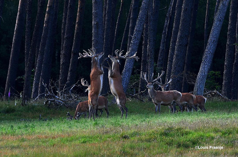 En zo stonden ze rechtop tegenover elkaar - Foto: ©Louis Fraanje