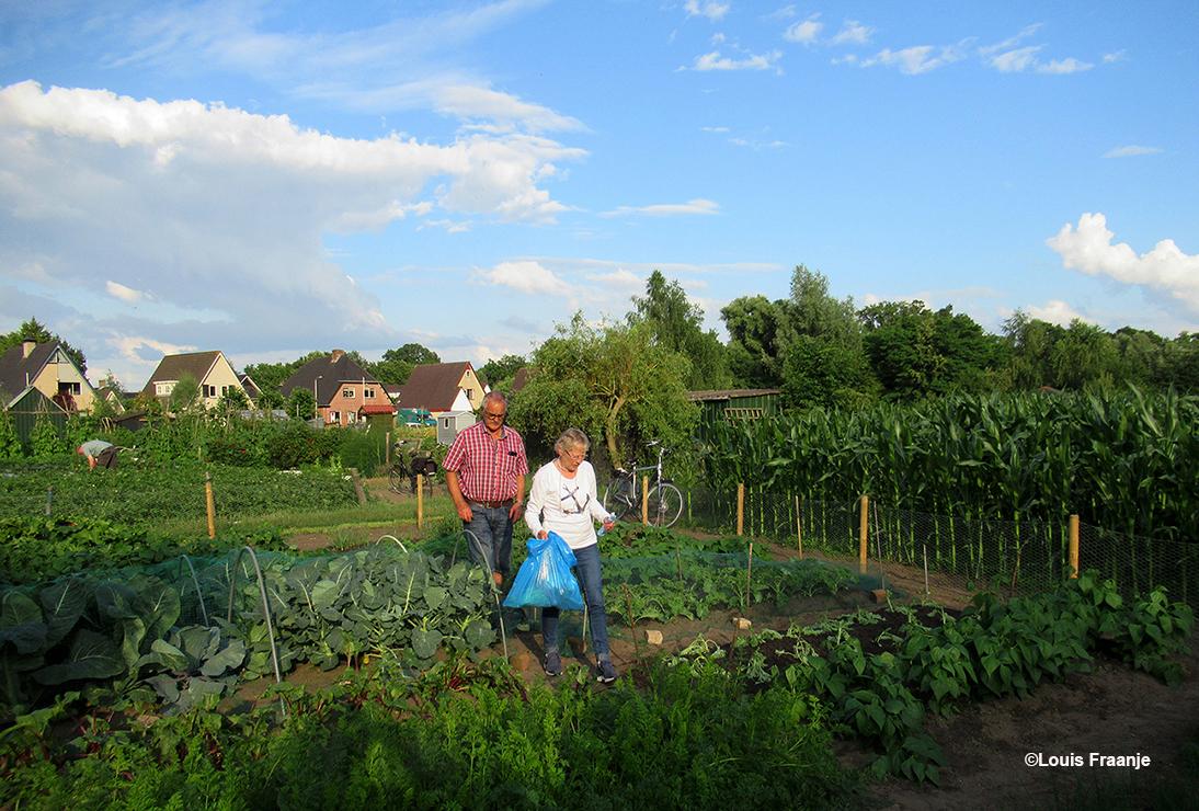 Broer Gert en Fransien in de groentetuin, kijken hoe alles erbij staat en lekker vers wat mee naar huis - Foto: ©Louis Fraanje