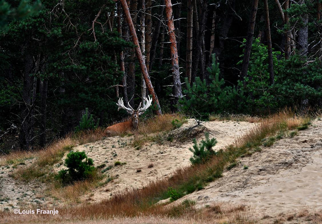 Hubertus had zich vanmorgen op een heel stil plekje teruggetrokken - Foto: ©Louis Fraanje
